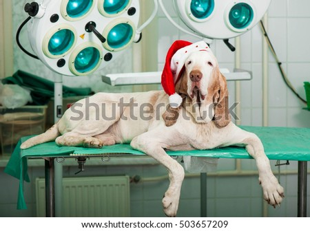 Christmas card with dog for veterinarian