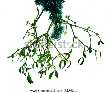 Christmas mistletoe waiting for couples to kiss under - stock photo
