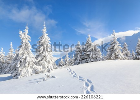 Clear sunny sky with a beautiful landscape on snow covered trees in a evanescent Christmas morning in the Carpathian mountains. - stock photo