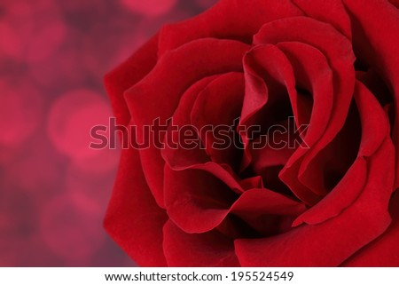 close up beautiful red rose on red bokeh - stock photo