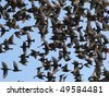 close up flock of birds on blue sky - stock photo