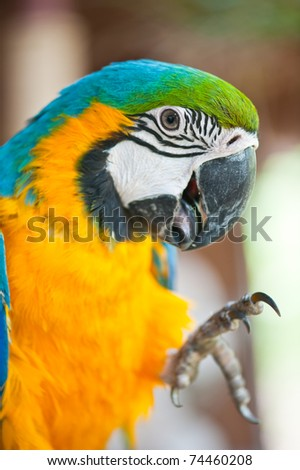Close Up of Blue and Yellow Macaw