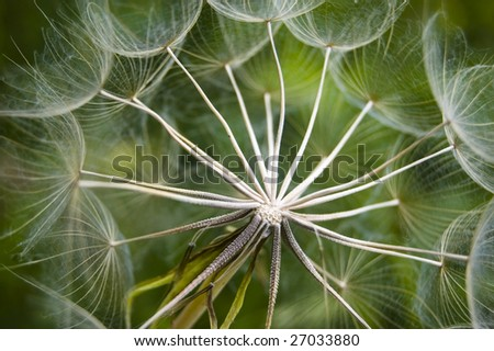 close up of  dandelion / abstract  natural background - stock photo
