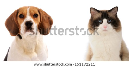 close up portraits of dog and cat in front on white isolated background