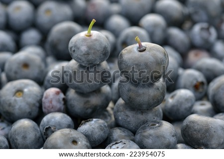 Close-up two stacked blueberry picked freshement - stock photo
