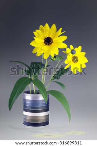 Close view of Arnica herb  blossoms in a vase - stock photo