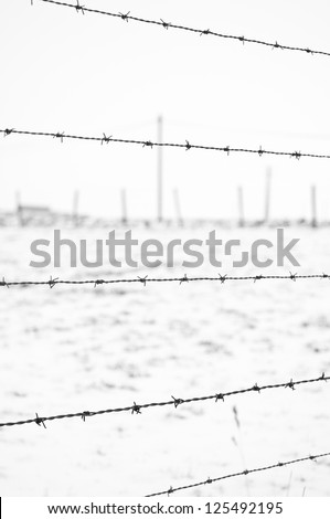 close view of barbed wire on  winter country background - stock photo