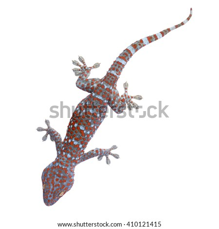 Closeup gecko isolated on white background. This has clipping path. - stock photo