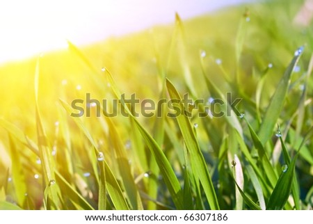 closeup green sprouts in a rays of sun - stock photo