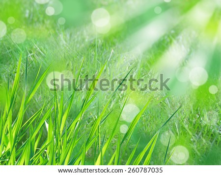 closeup of green grass on a sunny day with green abstract bokeh background   - stock photo