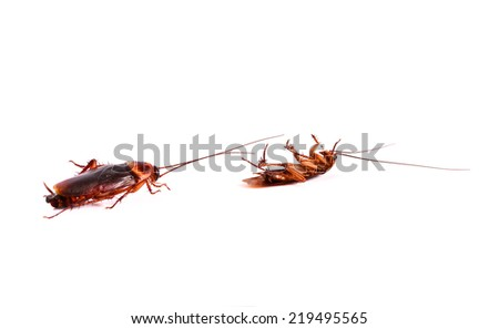 cockroaches isolated on a white - stock photo