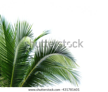 coconut leaves on white background - stock photo