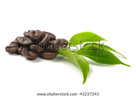 coffee grains and leaves