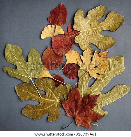 Collage of autumn leaves            - stock photo
