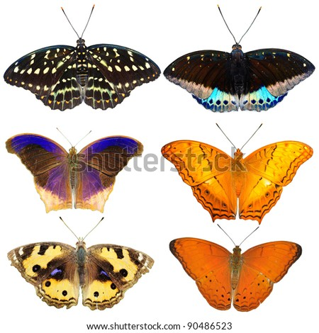 Collection of colored butterflies isolated on white from Thailand - stock photo