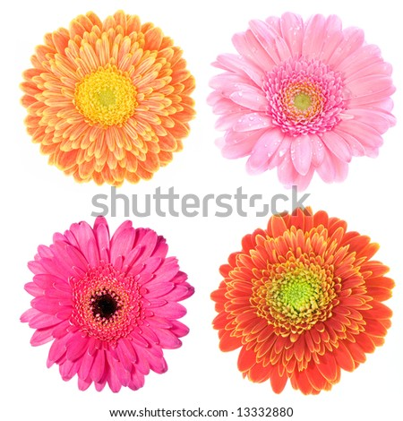 collection of four macro images of colorful gerbera flowers - stock photo