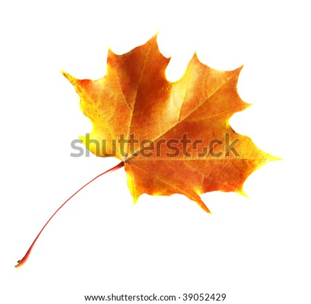 Colorfull autumn leaf