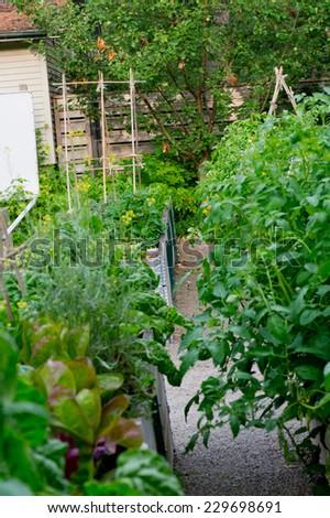 community garden  - stock photo