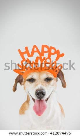 Cool happy small dog. Joy and love. New year party idea. Grey ( gray ) background orange word on the head.  - stock photo