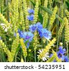 cornflowers and camomiles and wheat in field - stock photo