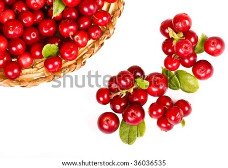 cranberries cowberry top view  isolated on white background  - stock photo