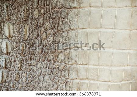 Crocodile skin texture and background,                              - stock photo