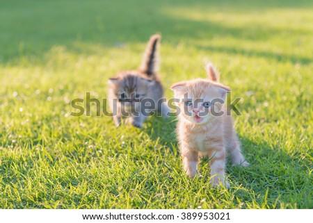 2 cute kitten on green grass in evening light - stock photo