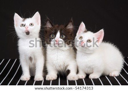 3 Cute kittens on black and white background - stock photo