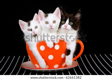 3 Cute kittens sitting inside large orange cup - stock photo