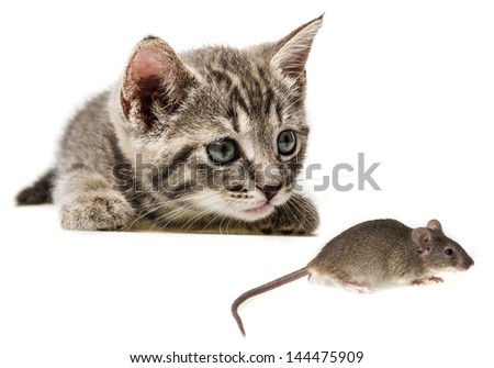 cute little kitten catching a mouse - stock photo