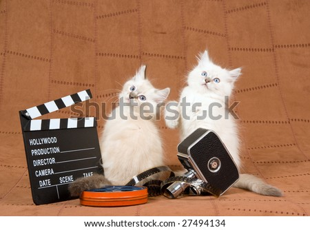 2 Cute Ragdoll kittens with vintage movie camera, movie clipboard and reel of film, on brown suede background - stock photo