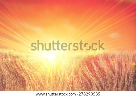 3d abstract sunbeam shine through natural fur or cornfield - stock photo