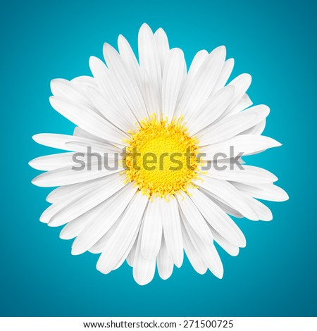 3D abstract sunny white daisy flower on blue background - stock photo