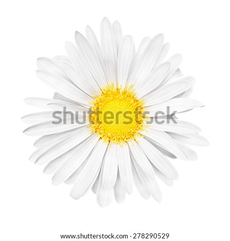 3D abstract sunny white daisy flower on pink background - stock photo