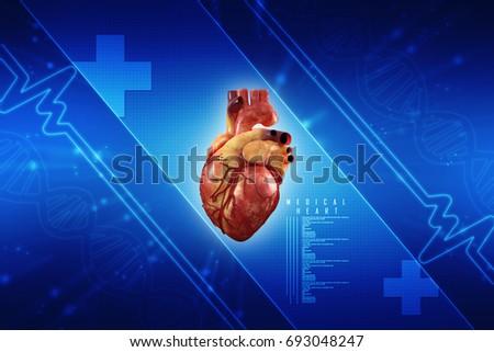 3 D Anatomy Human Heart Stock Illustration 693048247 - Shutterstock