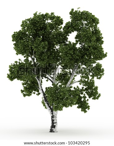 3d Birch tree isolated over white - stock photo