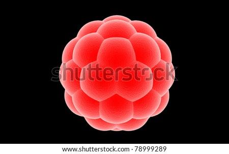 3D blastocyst on a dark background - stock photo