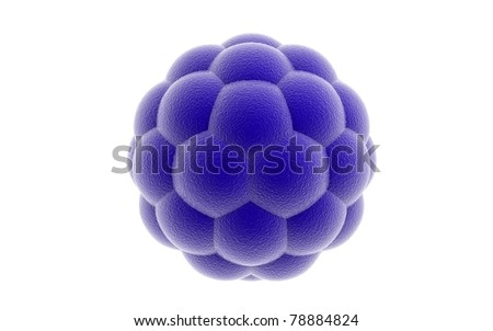 3D blastocyst on a white background