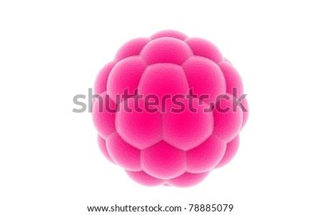 3D blastocyst on a white background - stock photo