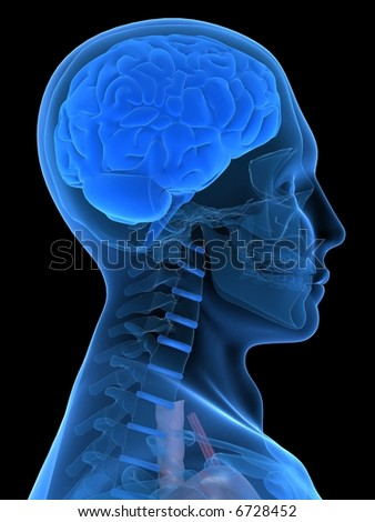 3d brain - stock photo