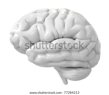 3d brain - stock photo