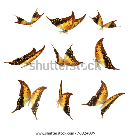3D Butterfly Pack Isolated