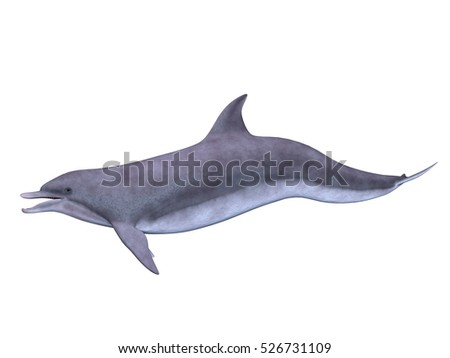 3D CG rendering of a dolphin