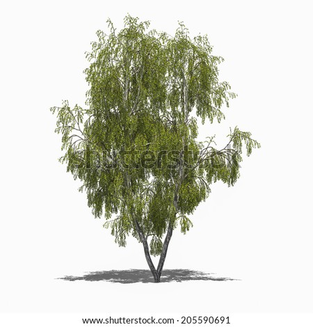3D computer rendered illustration Betula pendula summer