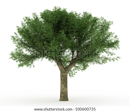 3d Cork Oak tree isolated over - stock photo