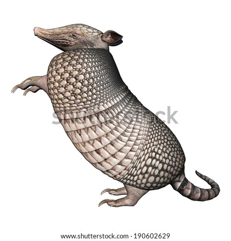 3D digital render of a Armadillos, a New World placental mammal with a leathery armor shell, isolated on white background - stock photo