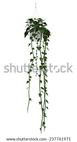 3D digital render of a bazilian jasmine in a flower pot isolated on white background - stock photo