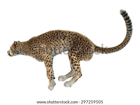 3D digital render of a big cat cheetah ready to jump isolated on white background