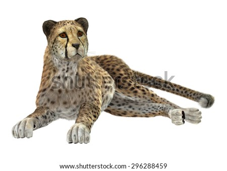 3D digital render of a big cat cheetah resting isolated on white background