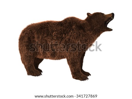 3D digital render of a brown bear isolated on white background - stock photo